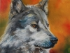 Olieverf opdracht Wolf 30x30 cm