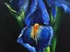 Olieverf Blauwe Iris II maat 10 x 10 cm (Verkocht)