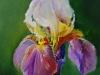 Olieverf Lichtpaarse Iris III te koop