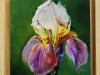 Olieverf iris met houten lijst