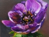 Olieverf paarse anemoon (Verkocht)