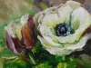 olieverf witte anemoon 14x14 cm (Verkocht)
