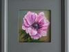 roze anemoon met lijstje 19x19 cm