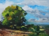 Olieverf schilderij te koop
