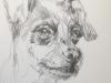 Studie van een Hondje in een schetsboek