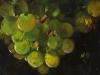 Olieverf druiven olieverf op paneel 14 x 14 cm