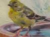 Groenling olieverf op paneel, maat 12 x 12 cm (verkocht)