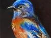 "Olieverf ""Blue bird"", maat 10x10 cm op Mus paneel te koop"