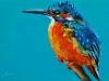 Olieverf IJsvogel 10x15 cm turqoise (Verkocht)