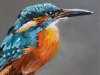Olieverf-IJsvogel-op-boomtak-22x11-cm (Verkocht)