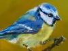 "vogelportret ""Pimpelmees"" Verkocht)"