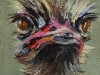 Struisvogel 5x5 cm (Verkocht)