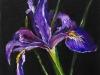 Iris op paneel 12 x 12 cm