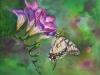 opdracht olieverf Fresia en Vlinder