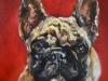 Hond Bulley opdracht schilderij 20x20x3,8 cm.