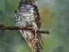 Olieverf schilderij in opdracht Koekoek-15x15-cm