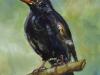 Opdracht-vogel-Merel 15 x 15 cm