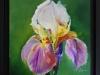 Olieverf Iris met lijstje te koop