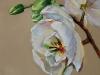 Olieverf Orchidee maat 10 x 10 cm te koop
