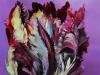 Olieverf Zwarte Papegaai tulp maat 10 x 10 cm te koop
