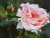 Olieverf oranje roze roos (Verkocht)