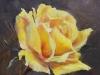 Olieverf gele-roos-joke-klootwijk (Verkocht)