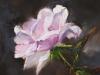 roze-roos olieverf op paneel (VERKOCHT)