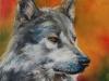 Olieverf opdracht Wolf 30x30 cm (Verkocht)
