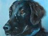 Olieverf schilderij zwarte labrador (VERKOCHT)