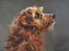 olieverf-hond-opkijkend te koop