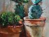 Cactussen Olieverf te koop