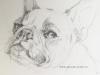 Mopshond schetsboekpagina, maat 15x20 cm