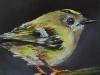 Olieverf Goudhaantje maat 10x10 cm (Verkocht)