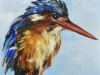 Olieverf-IJsvogel-10x10x2cm te koop