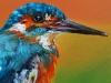 Olieverf IJsvogel met oranje maat 10x10 cm (Verkocht)