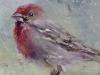 """olieverf """"Rode Vogel"""" op paneel, maat 12 x 12 cm (Verkocht)"""