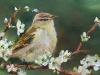 Olieverf Vogel met bloesem (Verkocht)