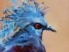Olieverf crowned Pigeon te koop maat 10x10cm te koop