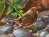 Vogel op kiezelsteentjes maat 14 x 14 cm te koop