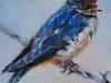 Olieverfschilderij boeren zwaluw 10 x 10 cm (VERKOCHT)