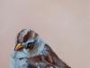 olieverf Birdie 12 x 10 cm (Verkocht)