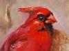 olieverf Rode Kardinaal 10x15cm te koop