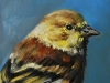 olieverf early bird 10x10 cm (Verkocht)